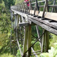 The Humpridge Track, Tuatapere  – Thursday, 19 January–Saturday, 21 January 2017